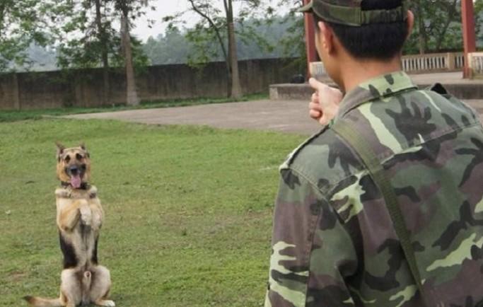 Hoàng Gia nơi phân phối dịch vụ trung tâm huấn luyện chó khu vực Hồ Chí Minh