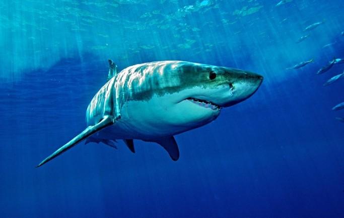 Nằm mơ thấy cá mập có phải điềm xấu không ?